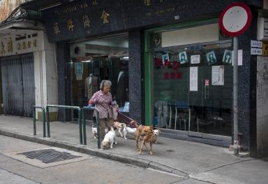 """長期收養照顧流浪狗的街坊""""好姐"""""""