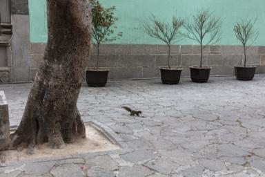 觀音堂前的松鼠
