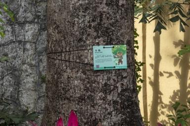 盧九公園內的木棉,編碼05134