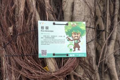 盧九公園內的榕樹,編碼0516