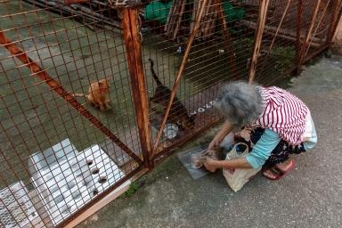 庇山耶街、喂養流浪貓的街坊