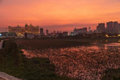 望德聖母灣濕地生態觀賞區