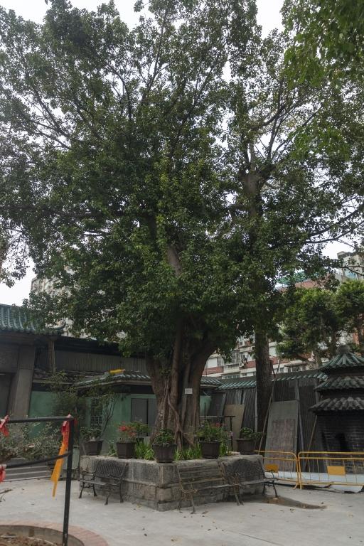 觀音堂,樹木編碼1-124