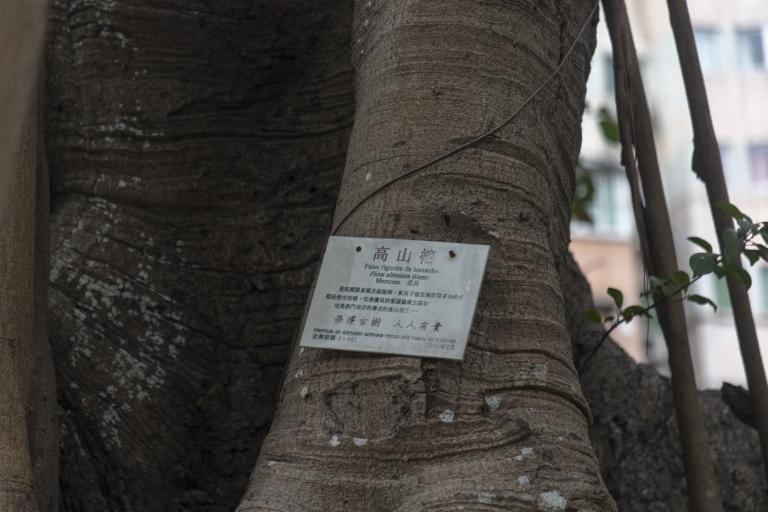 觀音堂,樹古編碼4-442